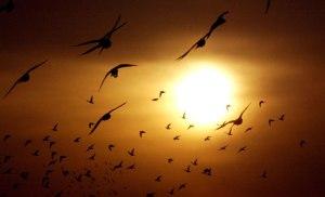 Peshawar-Pakistan-Birds-fly-at-sunset